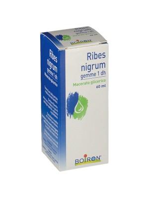 Boiron Ribes Nigrum Macerato Glicerico Gemme 60 ml - Medicinale Omeopatico