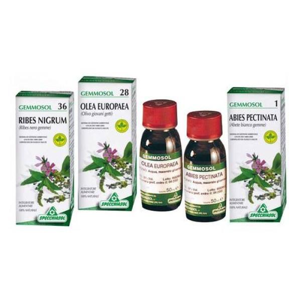 Specchiasol Gemmosol 11 Betulla Verrucosa Gemmoderivati 50 ml