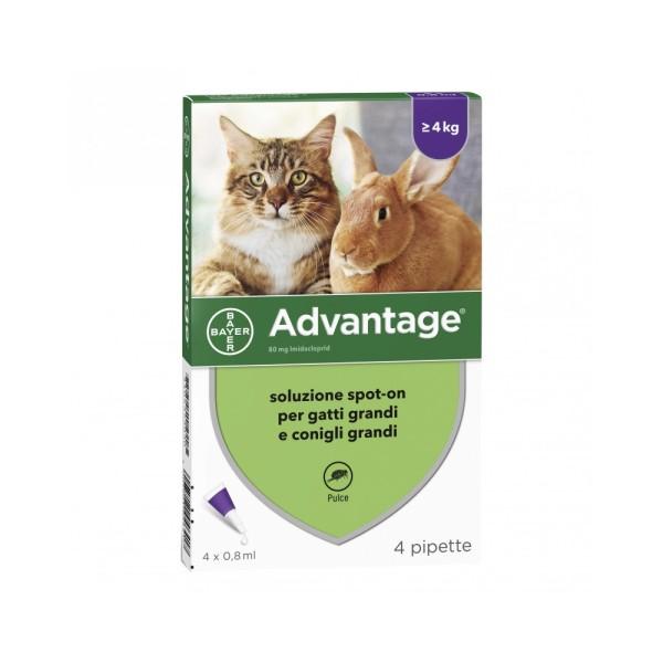Advantage 80 mg Soluzione Antiparassitaria Spot-On Gatti e Conigli 4 Pipette